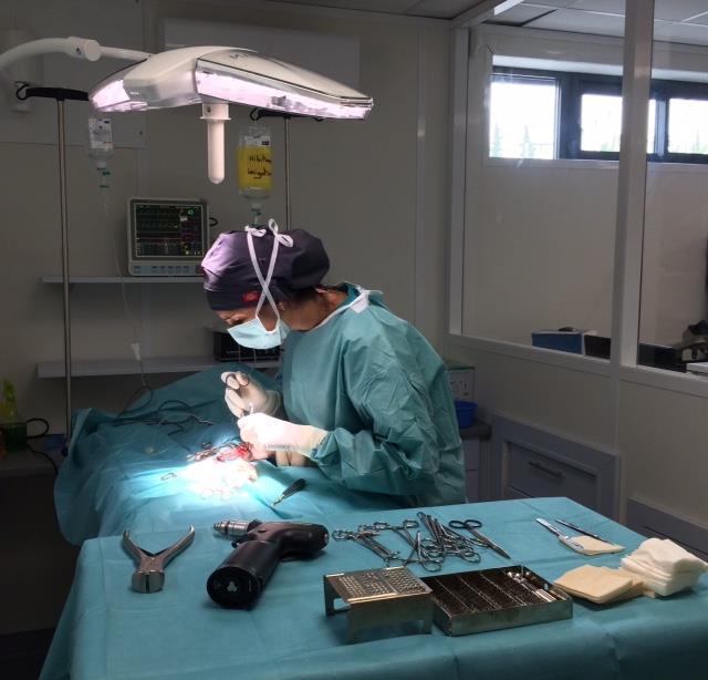 chirurgie des chiens et chats à Carcassonne
